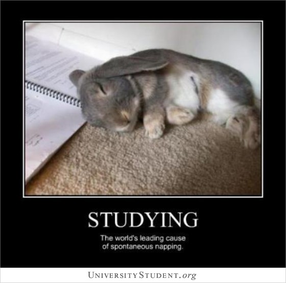 Studying. The world's leading cause of spontaneous napping