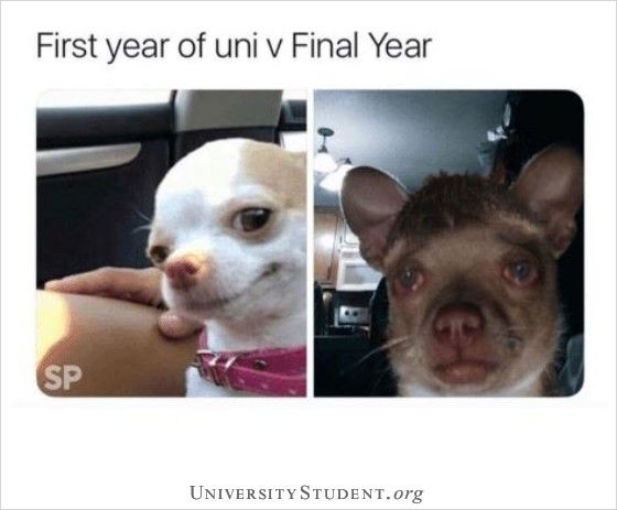First year of uni vs final year of university