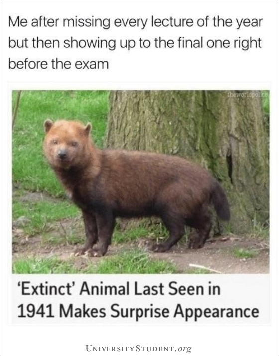 Me after missing every lecture of the year but then showing up to the final one right before the exam. Extinct animal last seen in 1941 makes an appearance.