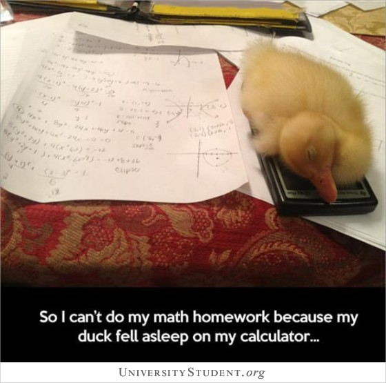 So I can't do my math homework because my duck fell asleep on my calculator
