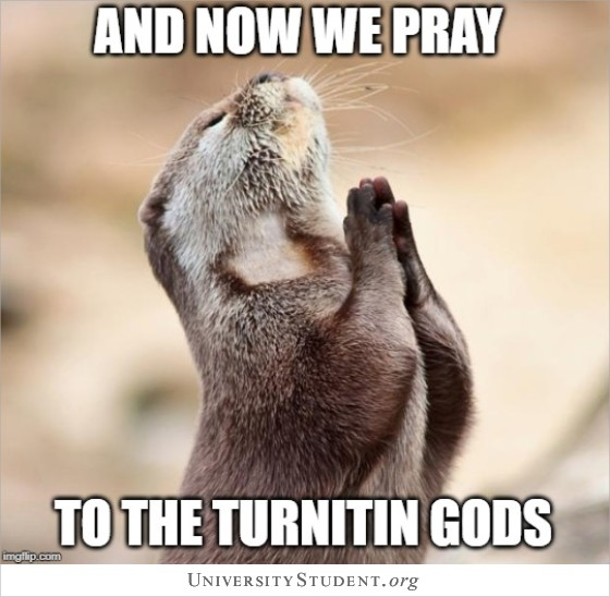 An now we ray to the Turnitin gods