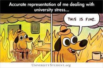 Accurate representation of me dealing with university stress