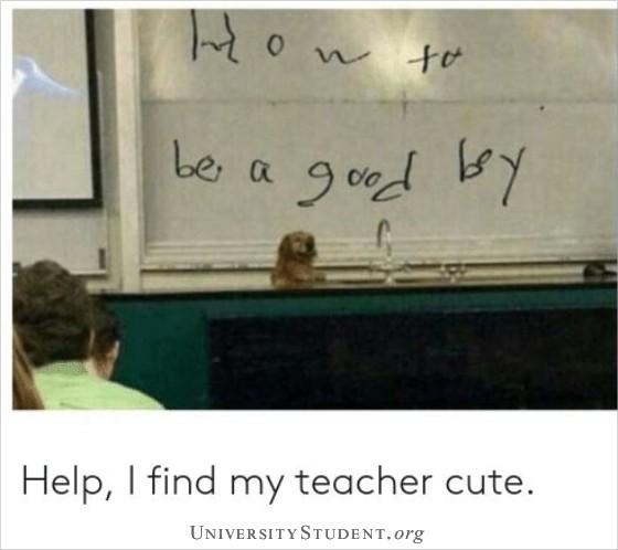 Professor Dog. How to be a good boy. Help, I find my teacher cute.